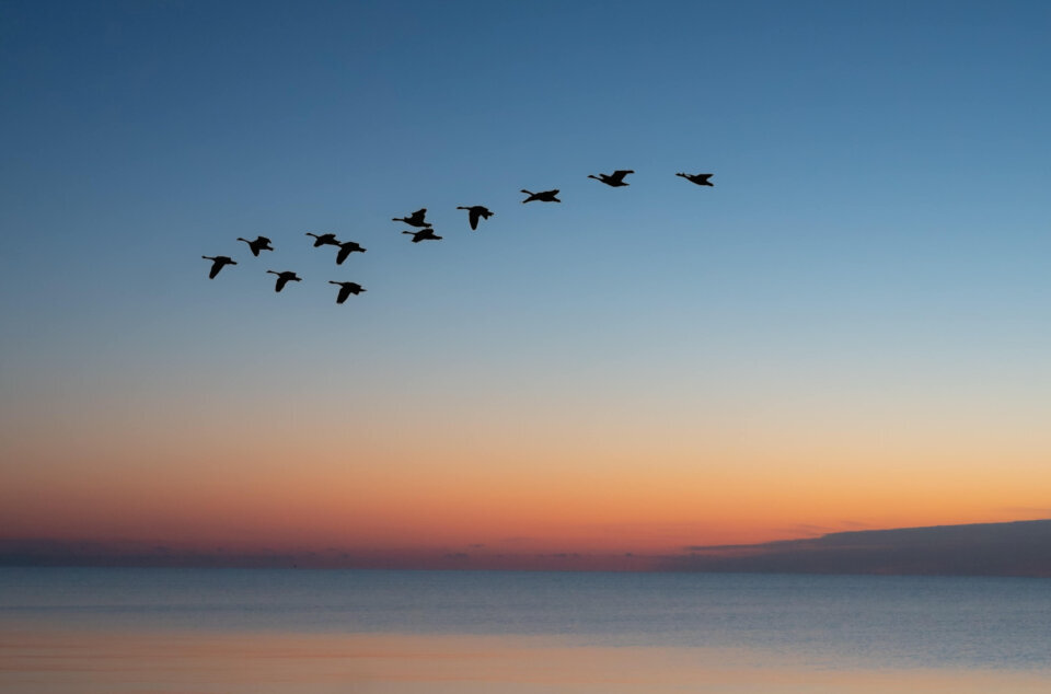 Birds migrating over sunset representing website migration